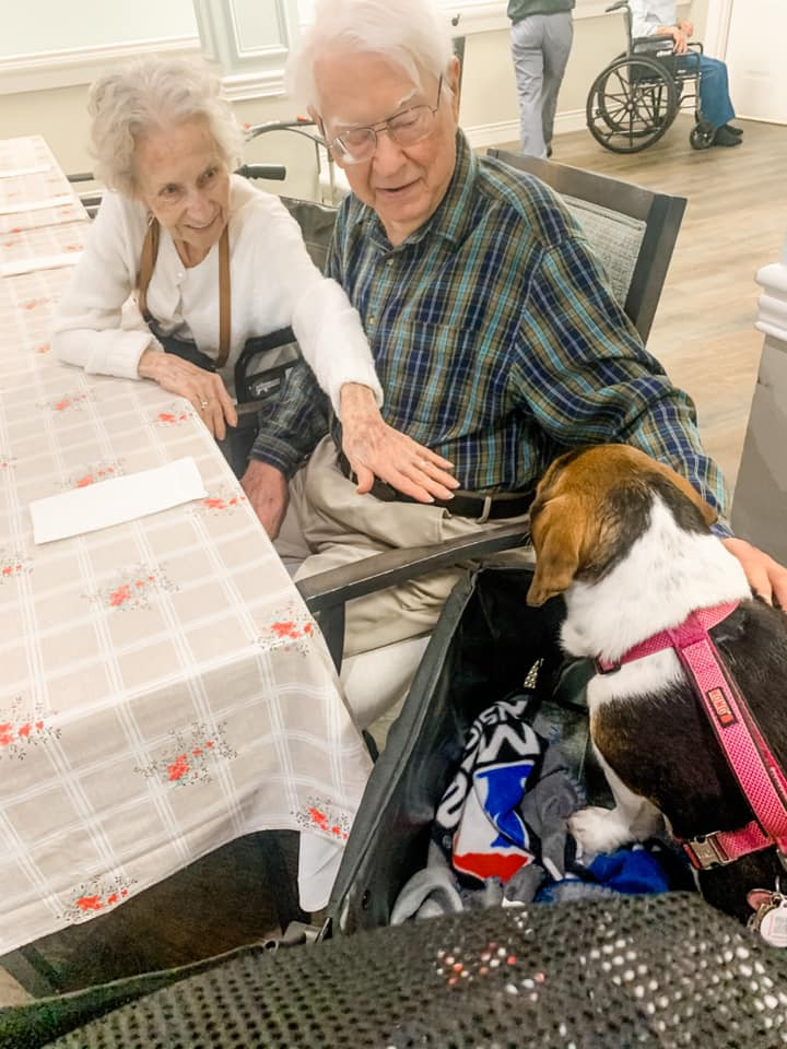 Man and Woman leaning to pet a therapy dog sitting on a chair